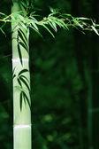 Bamboo shadow — Stock Photo