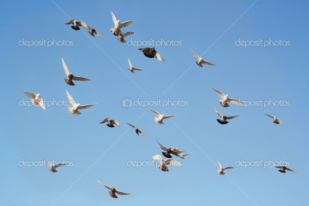 A group of free-flying pigeons in the blue sky — Stock Photo #2609339