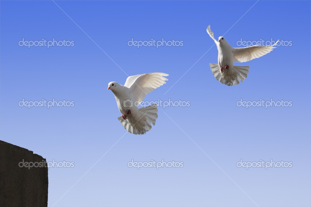 Are preparing to land the pigeons. — Stock Photo #2630322