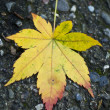 Yellow Leaf on Stones — Stock Photo