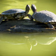 Two Turtles on a Log — Stock Photo
