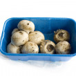 Rotten Mushrooms — Stock Photo