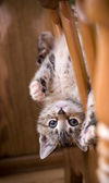 Upside Down Kitten — Stock Photo