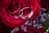 Wedding Bands Nestled in Roses — Zdjęcie stockowe
