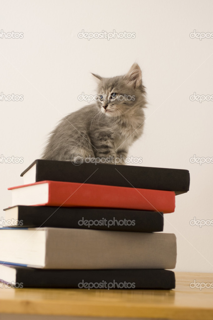 A kitten standing on a stack of books  Stock Photo #2192903