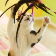 A Calico Cat Playing with a Feather Toy — Stock Photo #2292642