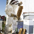 Beekeeper Holding Hive - Stock Photo