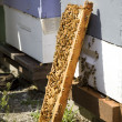 Foto Stock: Beehive Leaning Against Wooden Boxes