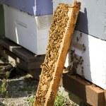 Ula opierając się drewniane skrzynie — Zdjęcie stockowe