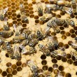 Stock Photo: Bee Hive Close Up
