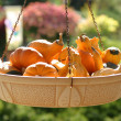 Gourds in basket — Stock Photo #2293589