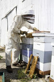 Beekeeper Working on Hives — Stock Photo
