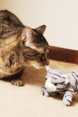Tabby Cat with Stuffed Cat — Stock Photo