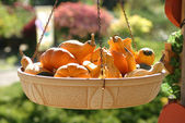 Gourds in basket — Stock Photo