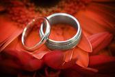 обручальные кольца, опираясь на gerbera daisy — Стоковое фото