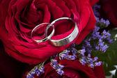 обручальные кольца, расположенный в розы — Стоковое фото