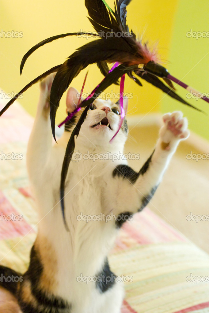 A calico cat having fun with a large feather toy — Stock Photo #2292642