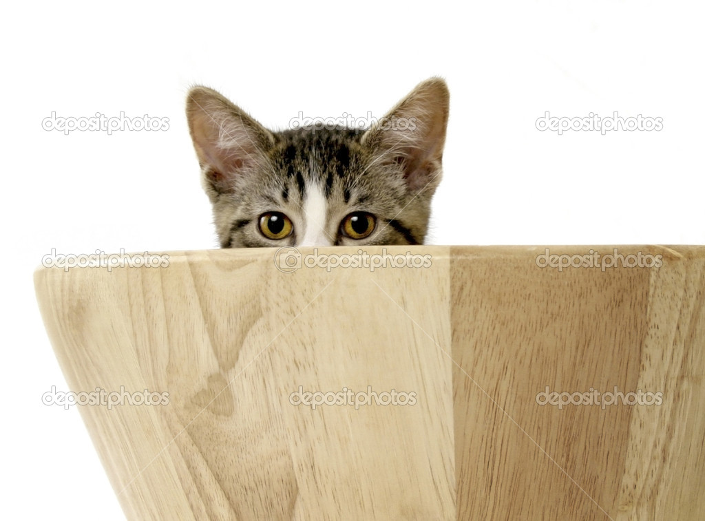 Cute kitten peeking out from wooden bowl — Stock Photo #2294059