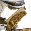 Beekeeper with Hive Frame - Stock Photo
