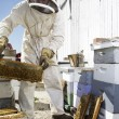 Stock Photo: Beekeeper Moving Hive