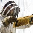 Stock Photo: Beekeeper Looking at Hive