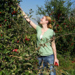 Young Woman Picking Apples — Stock Photo