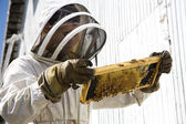 Beekeeper Looking at Hive — Stock Photo