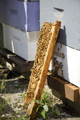 Beehive Leaning Against Wooden Boxes — Stock Photo