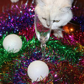 Cristmas and cat — Stockfoto