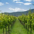thumbnail of Vineyard 1