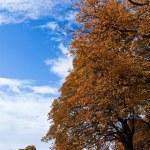 Autumn 2 — Stock Photo #2245206
