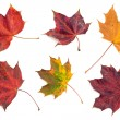 Autumn leaves — Stock Photo #2245733