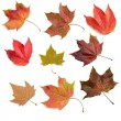 Stock Photo: Autumn leaves 2