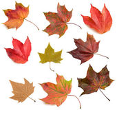 Autumn leaves 2 — Stock Photo