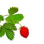 Strawberry on white. — Stock Photo #2179552
