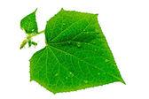 Raindrop on green leaves. — Stock Photo