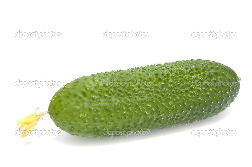 Green cucumber. Isolated on white background. — Photo #2179540