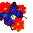 The drawn butterfly,  clipping Path — Stock Photo