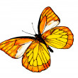 Stock Photo: Drawn butterfly.
