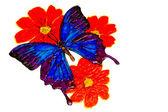 Tažené motýl, ořezová cesta — Stock fotografie