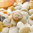 Stones and seashells. — Stok fotoğraf