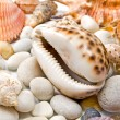 Seashells over stones — Foto de Stock