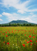 Red poppy field with hill — Stock Photo