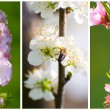 Royalty-Free Stock Photo: Set of spring fruit tree blossoms