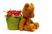 Vintage teddy with primrose flowers — Stock Photo