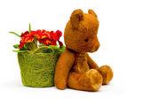 Vintage teddy with primrose flowers — Stock Photo
