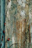 Old grunge wooden background — Stock Photo
