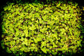 Lomofied green plant texture background — Stock Photo