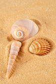 Sea shells isolated with sand — Stock Photo