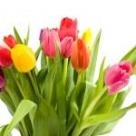 Bouquet of Dutch tulips — Stock Photo